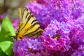 Picture Butterfly, Flowers, Macro, Spring, Butterfly, Flowering, Spring, Macro