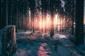 Picture nature, forest, winter, light, trees
