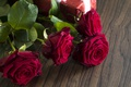 Picture red, love, romantic, gift, roses, red roses, valentine`s day