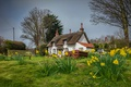 Picture Appleby, spring, daffodils, houses, England