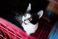 Picture cat, grille, yellow eyes, dark, black and white, kitty, background, portrait, look, cat
