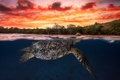 Picture sea, the sky, water, clouds, sunset, the ocean, turtle, the evening, under water, over the ...