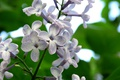 Picture may, serene, macro, flowers