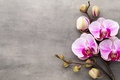 Picture Orchid, orchid, flowers, pink