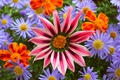 Picture Colors, Flowers, Flowers