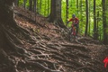 Picture forest, girl, nature, bike, roots, sport, track, helmet, braids, bike, bicycle, cycle, Cycling, specialized, mtb, ...