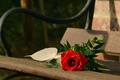 Picture rose, flower, leaves, bench, Board