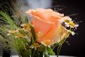 Picture rose, bouquet, chamomile