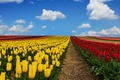 Picture clouds, tulips, field, the sky, Germany