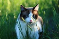 Picture cat, greens, grass, look
