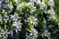 Picture white, macro, flowers, flowering