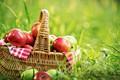 Picture greens, summer, grass, basket, glade, apples, fruit, bokeh