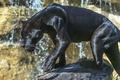 Picture glare, predator, power, Panther, grace, wild cat, zoo, sunlight, black Jaguar