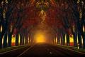Picture nature, autumn, road, Trees