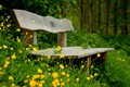 Picture flowers, grass, bench, Park, forest