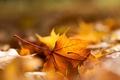 Picture foliage, autumn, sheet, macro