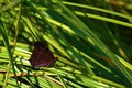 Picture butterfly, grass, macro, summer