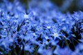 Picture flowers, spring, flowering