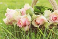 Picture greens, summer, grass, leaves, flowers, nature, green, background, rose, roses, bouquet, petals, gentle, pink, basket, ...