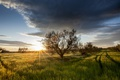 Picture field, grass, trees, sunset