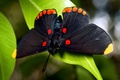 Picture leaves, Butterfly, circles, patterns, wings, dark