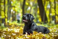 Picture animal, dog, autumn, nature, leaves