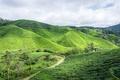Picture cameron, green, hill, cameron highland, boh tea, boh tea plantation, estate, nature, malaysia, highland