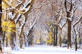Picture alley, New York, usa, Central Park, the first snow