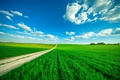 Picture clouds, grass, the sky, road, field, greens