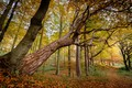 Picture trees, forest, autumn, foliage, Germany