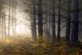 Picture forest, fern, light, morning, fog