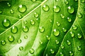 Picture green, leaf, drops, plant, Water
