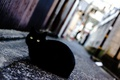 Picture cat, eyes, black, street