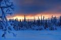 Picture forest, branches, dawn, sunrise, trees, winter, Alaska, snow, Tolsona, Tolson, morning, Alaska