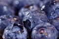 Picture drops, blueberries, bokeh, macro, berries