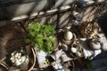 Picture plant, view, shadows, GOOD MORNING, items
