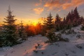 Picture winter, forest, the sun, snow, nature