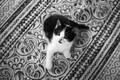 Picture look, carpet, baby, black and white, kitty, monochrome