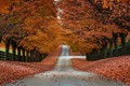 Picture trees, autumn, the fence, foliage, road