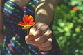 Picture flower, girl, hand
