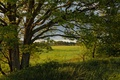 Picture trees, Tver oblast, field, summer, Sunny