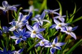 Picture petals, leaves, Wallpaper, stems, primroses, treatment, picture, light, rendering, flowers