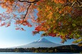 Picture the sky, leaves, branches, tree, mountain, the volcano
