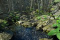 Picture stream, stones, vegetation, Enchanted Beauty PW, nature