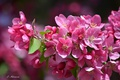 Picture flowering, tree, petals, branch, flowers