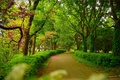 Picture Park, Trees, Track, Park, Spring, Trees, Alley, Spring, Path
