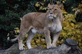 Picture tree, lioness, nature