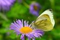 Picture Butterfly, Flower, Butterfly, Flower, Macro, Macro, Bokeh