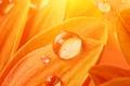 Picture drops, light, petals