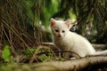 Picture cat, forest, branches, small, needles, ate, kitty, trees, white, kitty, nature, cat